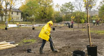 Knowlton faculty and students plants trees in South Jackson Community Garden